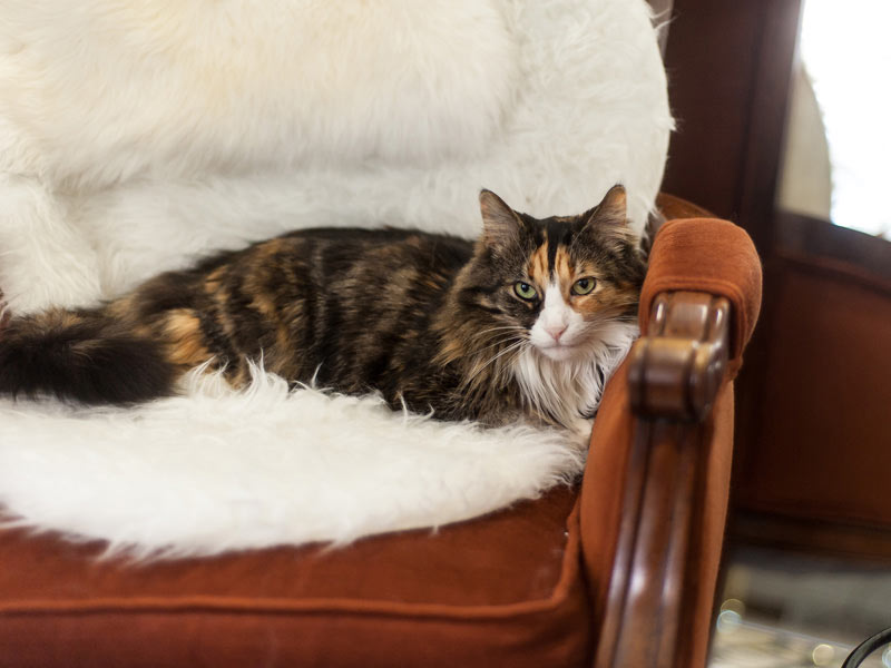Wildship Studio cat, Jinni, on her favorite chair