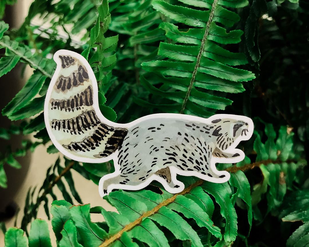 cute raccoon vinyl animal sticker art by wildship studio held against plants